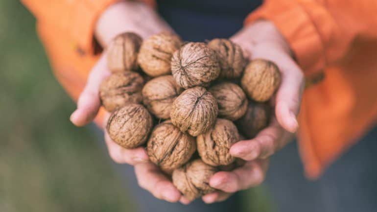 manfaat walnut bagi kesehatan