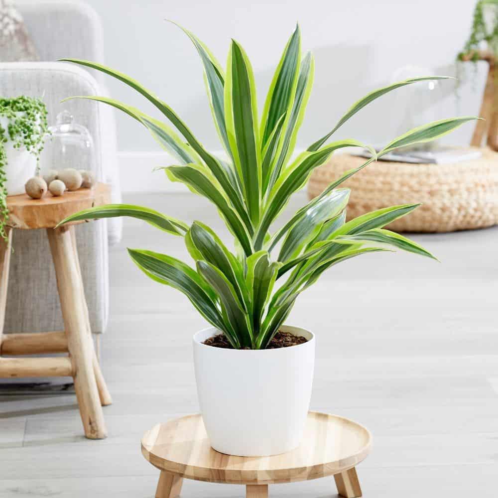 tanaman hidup