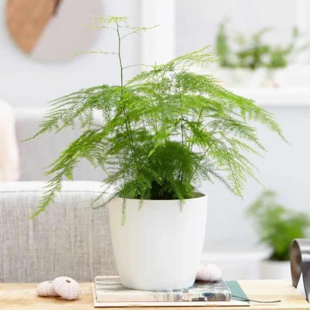 jenis tanaman hias