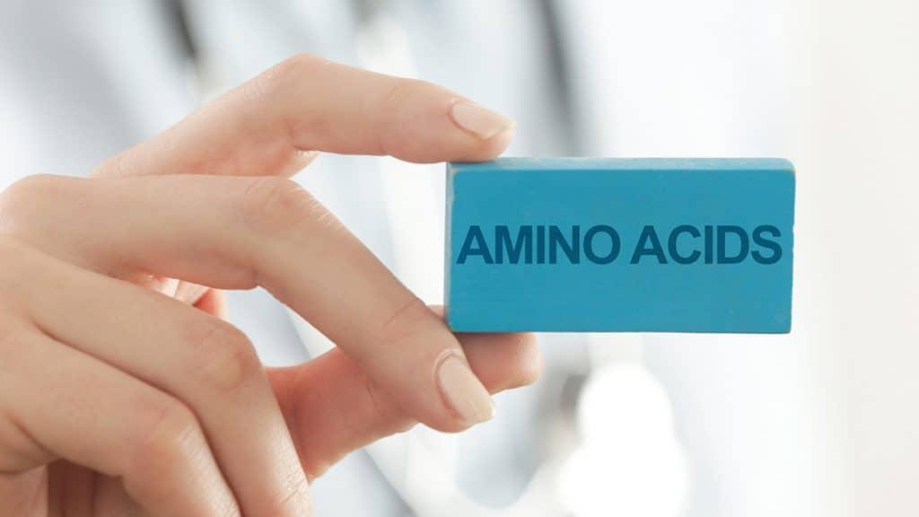 fungsi asam amino